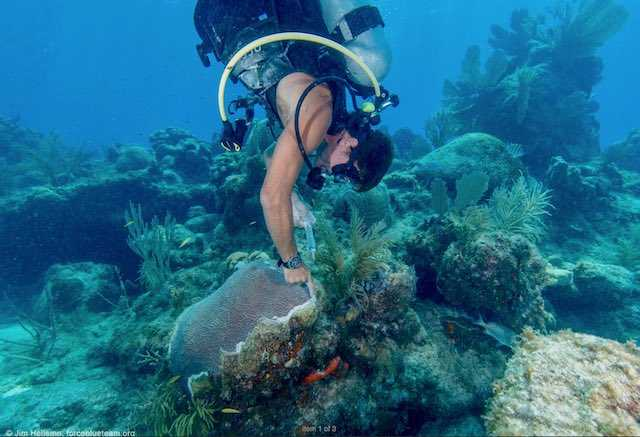 Florida Veterans Giving Back and Finding Renewed Purpose Through Coral Reef Clean Up